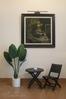 Cây Chuối cảnh trang trí phòng khách