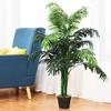 Cây Dừa cảnh trang trí nội thất